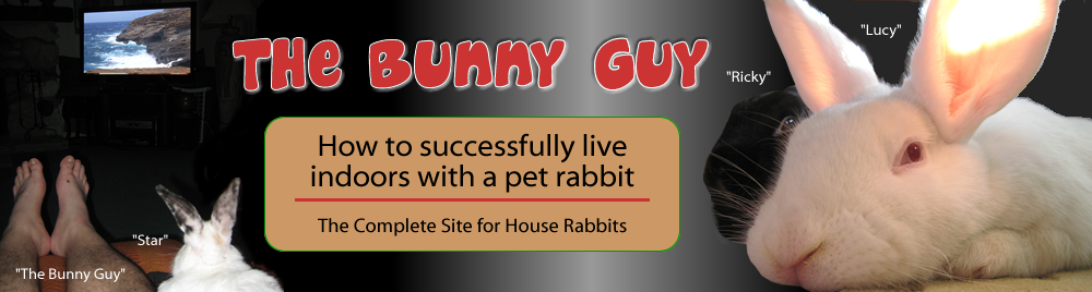 The Bunny Guy - How To Successfully Live Indoors With A Pet Rabbit.